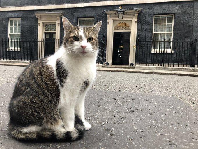 Larry, el gato que ha durado más que los últimos Primeros Ministros en la calle Downing